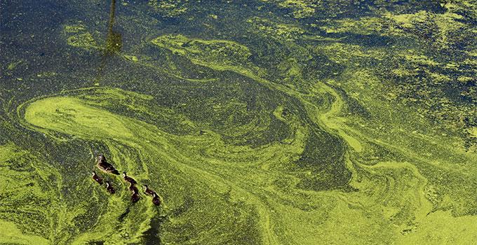 phosphate algae bloom