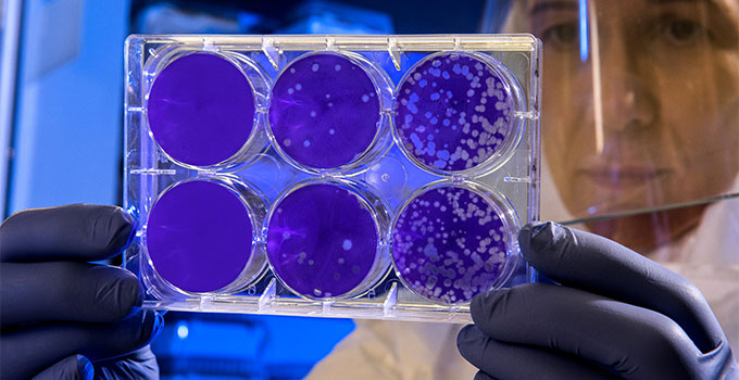 ultraviolet light destroys bacteria